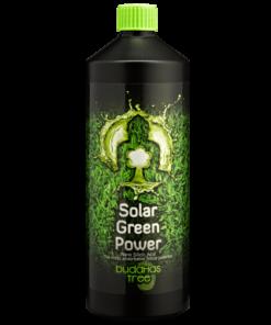 Buddhas Tree Solar Green